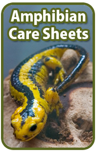 Amphibian Care Sheets