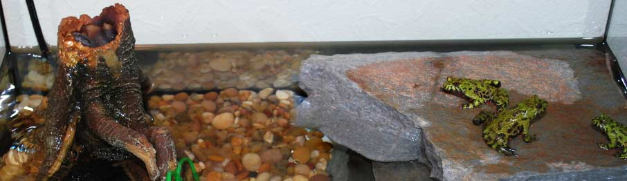 Terrarium sutiable for Oriental Fire-Bellied Toads