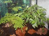 Live plants are an attractive addition to a Fire-Bellied Newt Terrarium